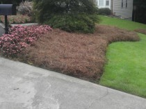 Curb Appeal Before