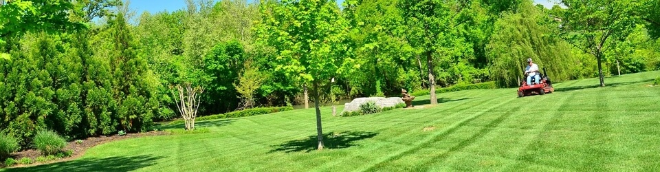 Golden Pine Straw now offers Lawn Maintenance services | Call us for details