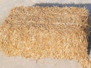 Golden Pine Straw | Wheat Straw